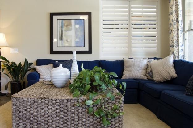 Las 5 mejores plantas para su hogarmudanzas ajusco for Casa piano sucursales